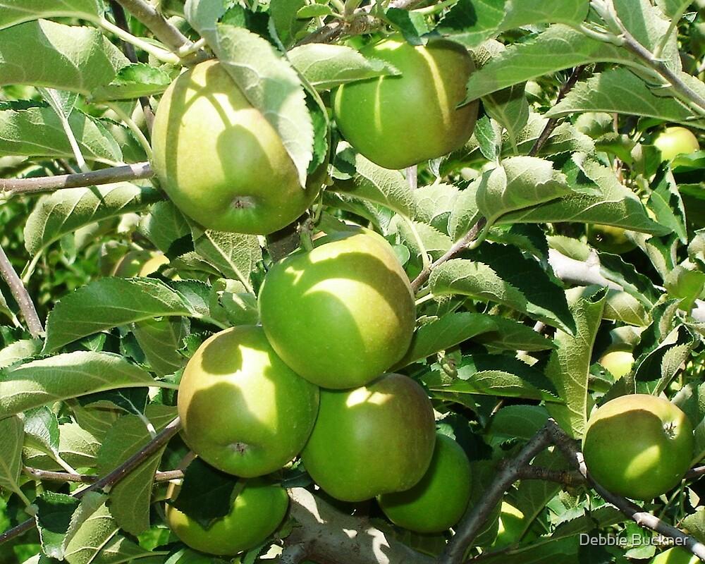 Apples by Debbie Buckner