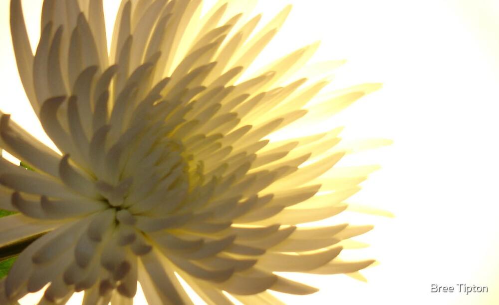 White Flower by Bree Tipton