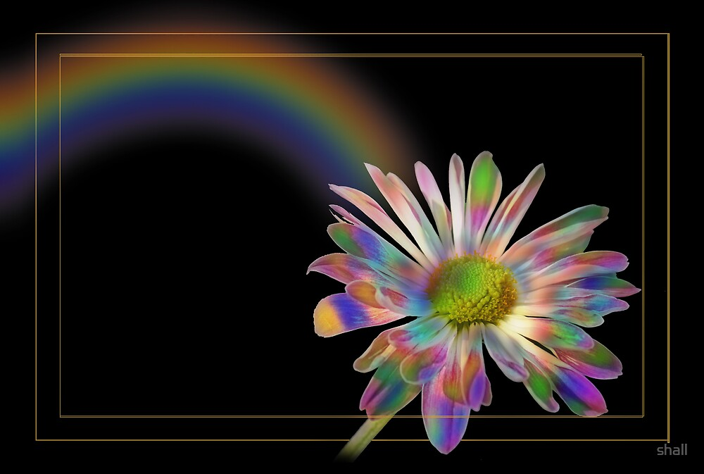 Rainbow flower by shall