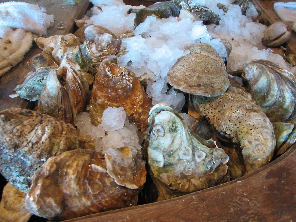 Oysters Anyone? by danita