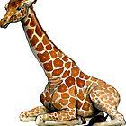 Resting Giraffe by Pip Abraham