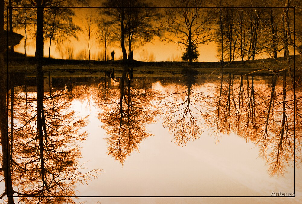 Dream of the trees by Antanas