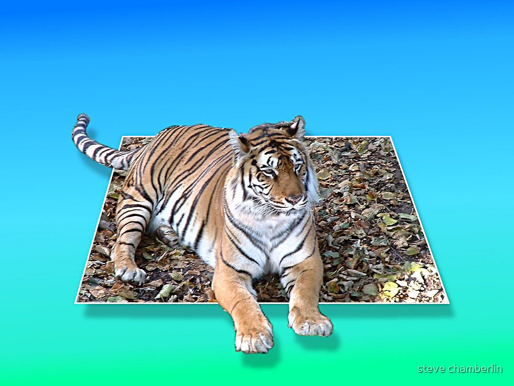 Tiger on a magic carpet! by steve chamberlin