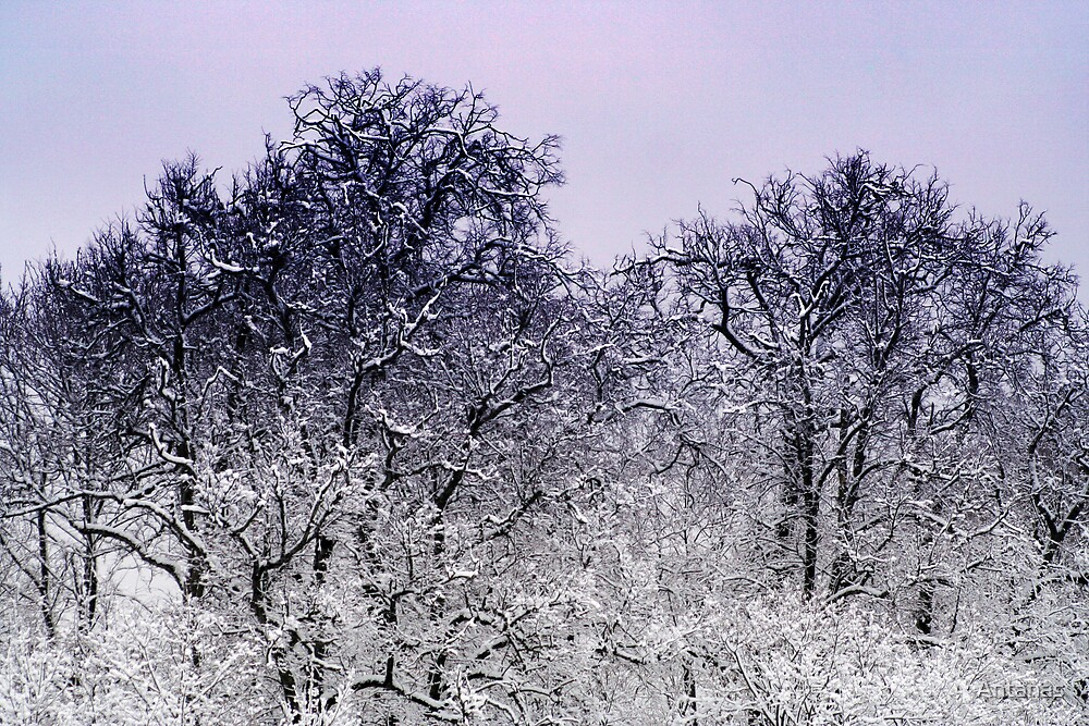 Winter after storm in park Vilnius city by Antanas