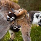 Lemur Transport by Ozerk Kalender