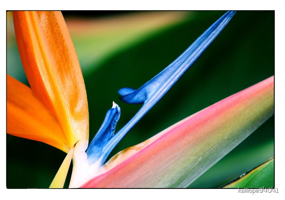 Bird of Paradise Plant by kalliope94041