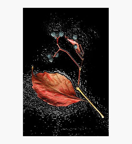 Leaf in tar Photographic Print