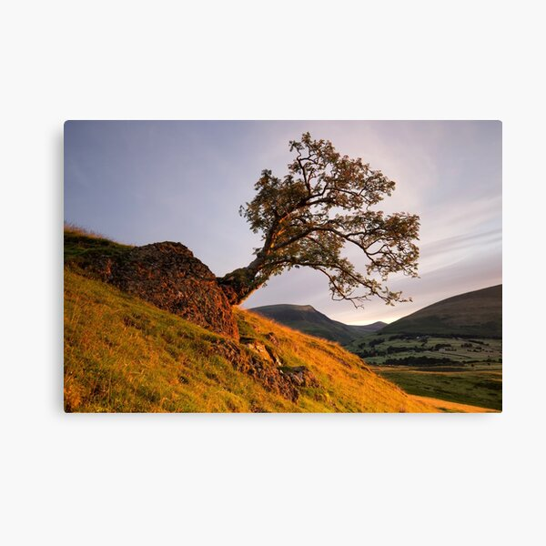Lone Tree Golden Hour Canvas Print