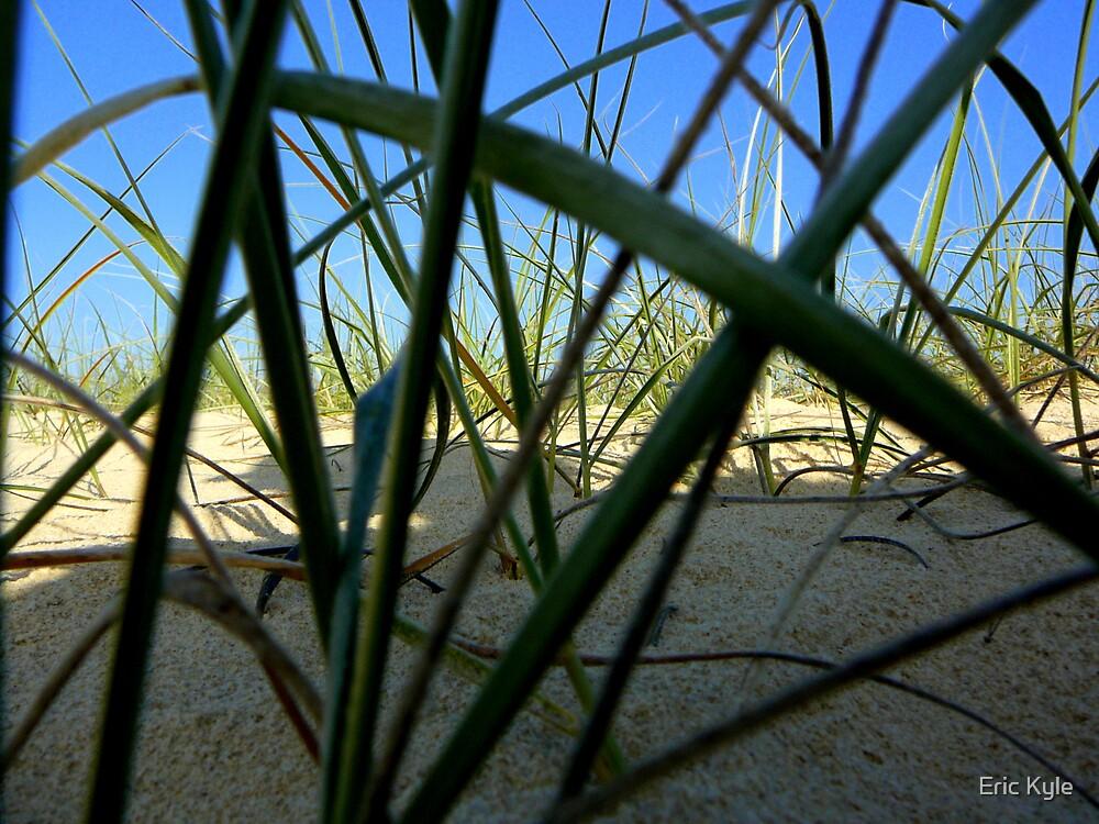 BEACH GRASS by Eric Kyle