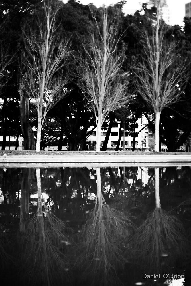 Trees on lake by Daniel  O'Brien