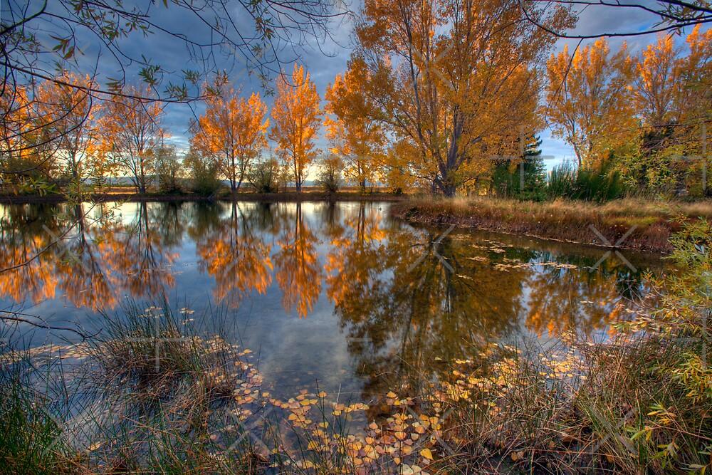 Autumn in Otago County by Mel Brackstone