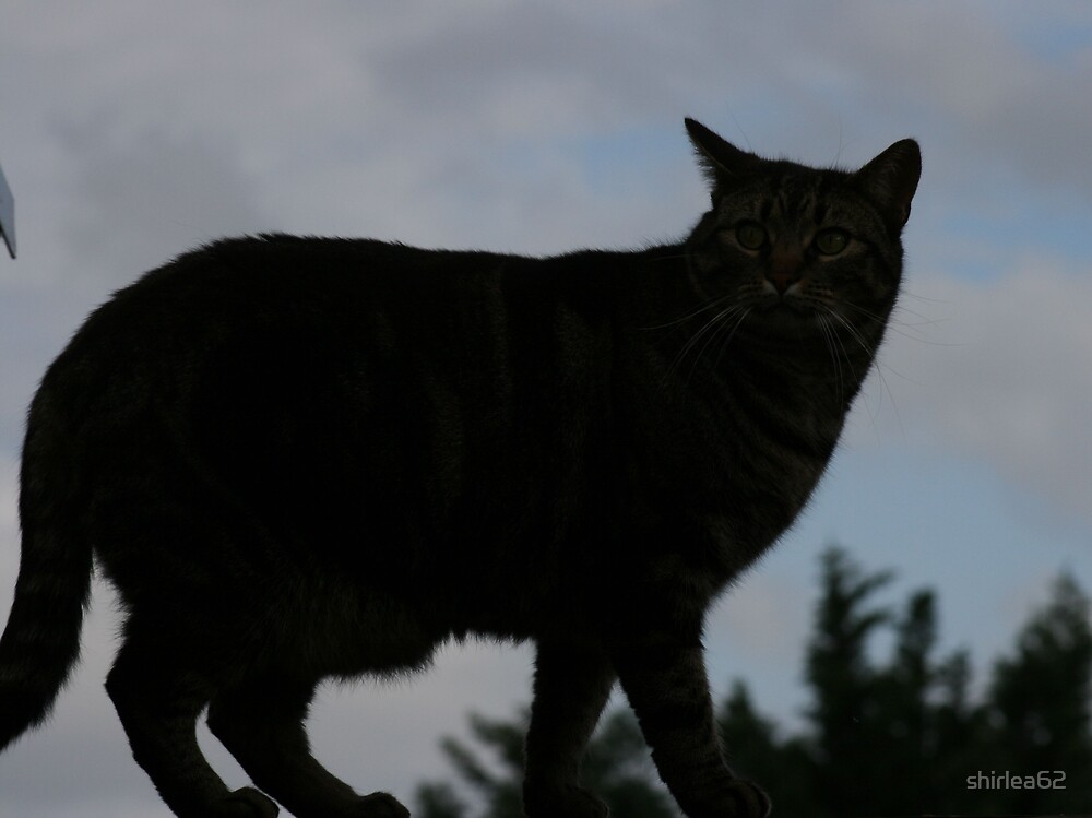 Silhouette of a cat by shirlea62