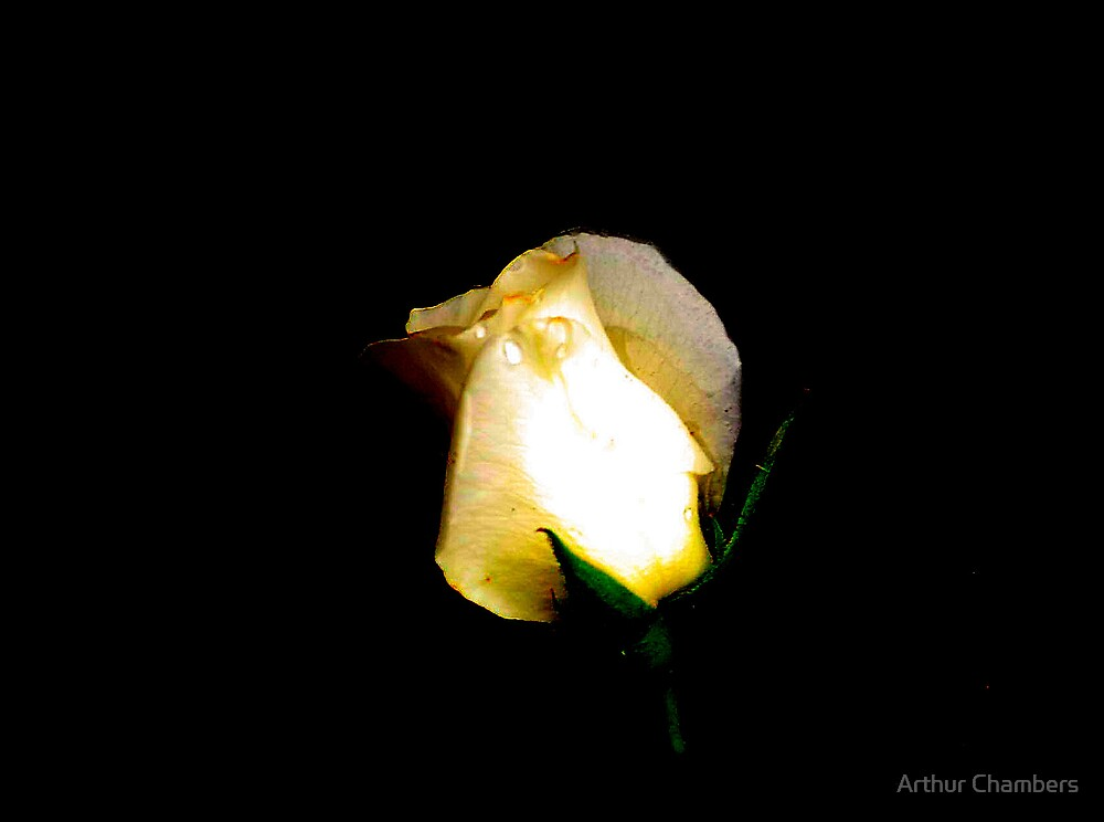 """"""" A ROSE FOR TODAY"""" by Arthur Chambers"""