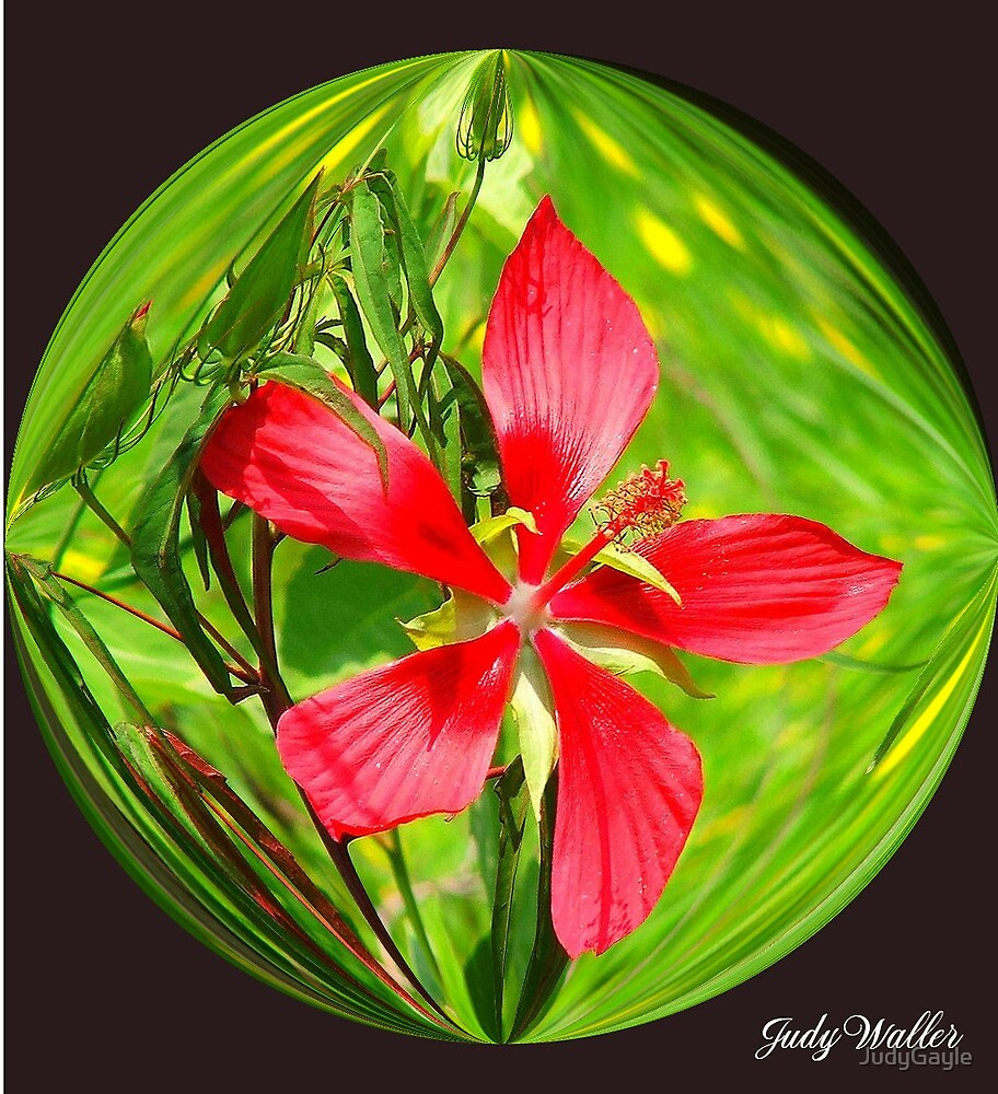 Red Beauty by Judy Gayle Waller