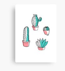 Colorful cactus Canvas Print