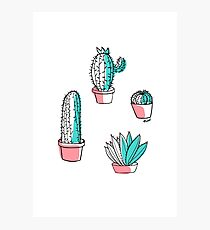 Colorful cactus Photographic Print