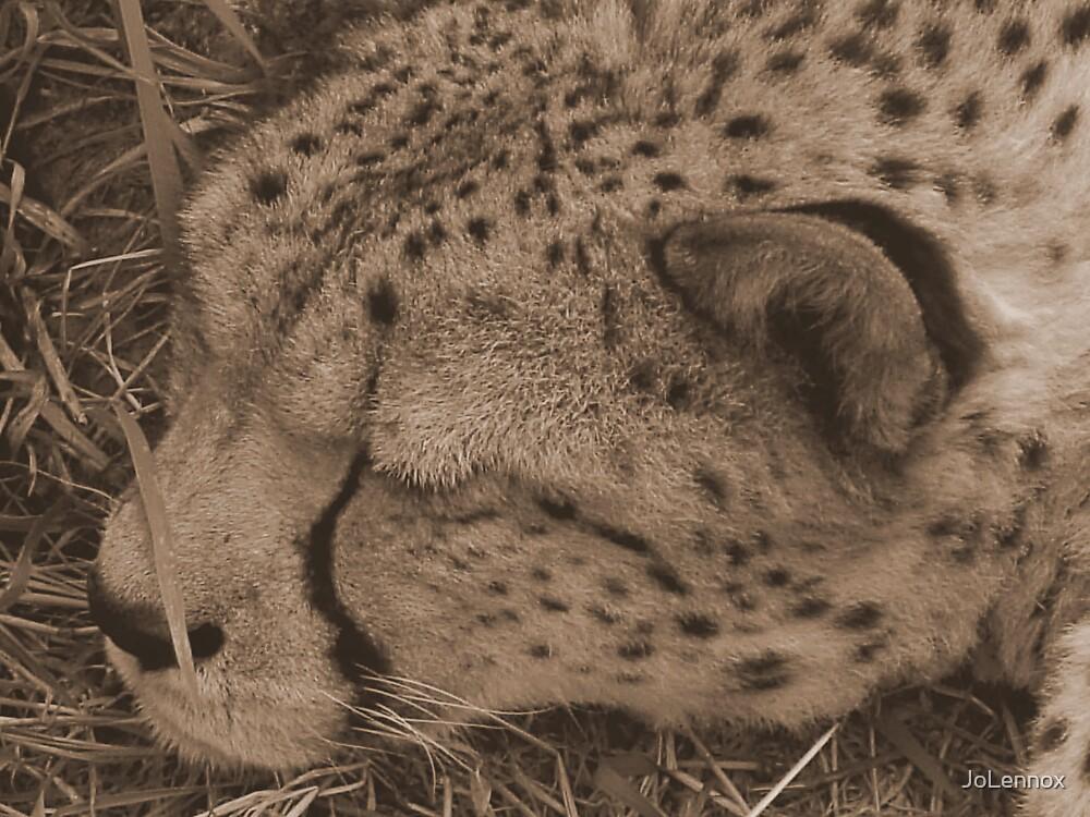 Sleeping by JoLennox