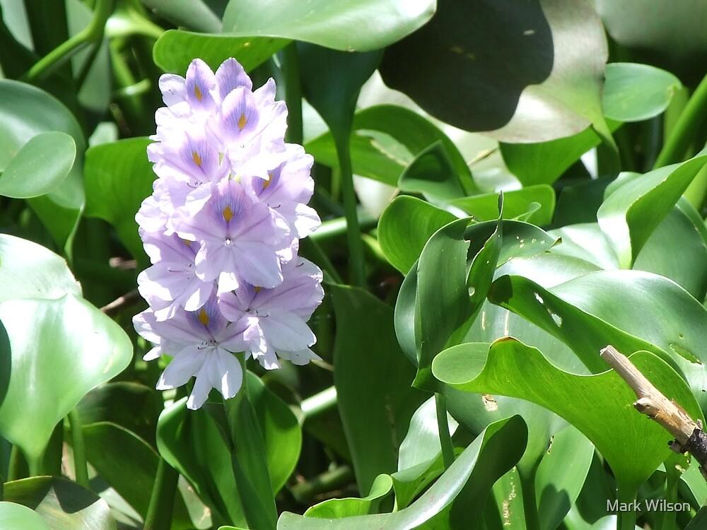 Purple Water Flower by Mark Wilson