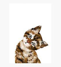Baby Cat Photographic Print