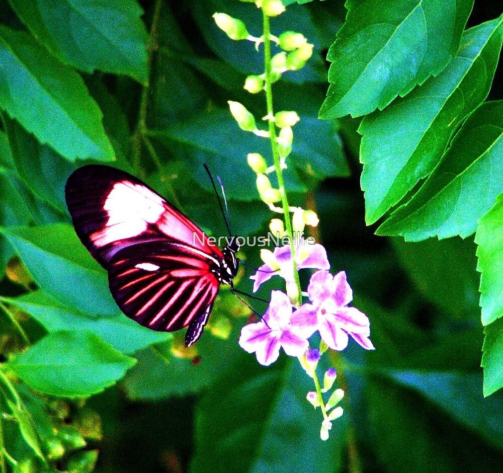 Butterfly by NervousNellie