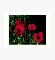Red Painted Poppies Art Print