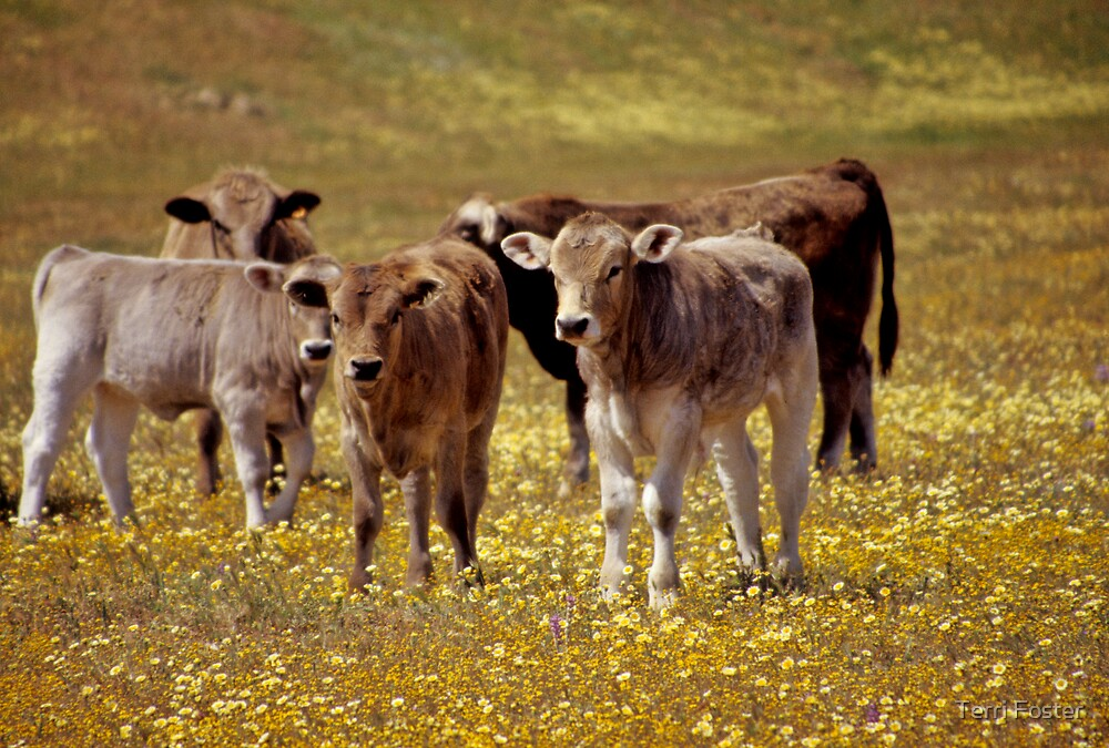 Calves and Flowers by Terri Foster