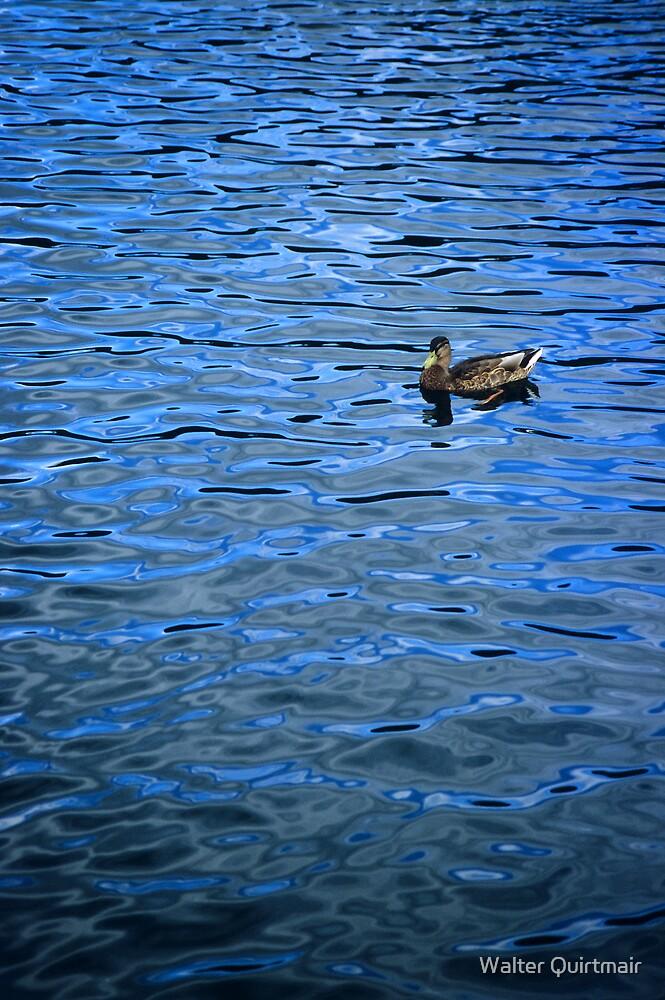 Swim in Blue by Walter Quirtmair