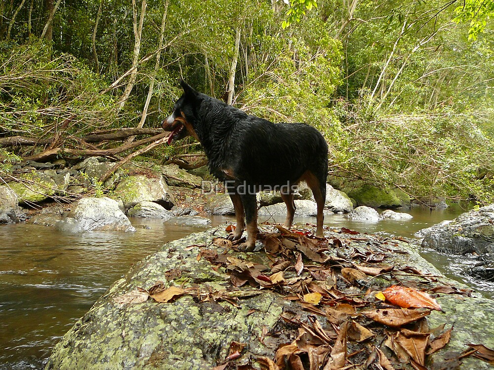 For Critique - Can I swim mum? by Di Edwards