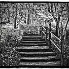 The Stairs by Gail Falcon