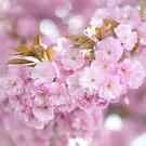 Kwanzan Cherry Branch by JennyRainbow