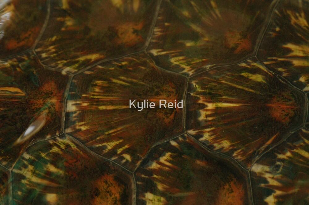 Shell by Kylie Reid