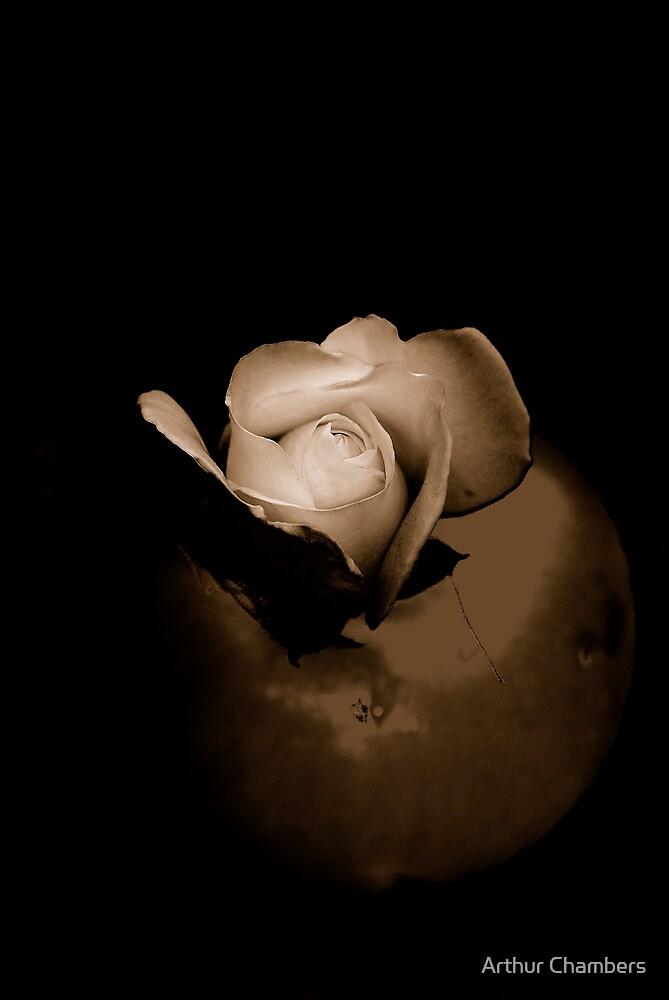 CHINA  ROSE by Arthur Chambers