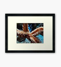 Macro on the starfish Framed Print