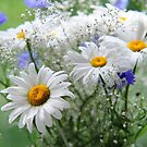 Daisies and Cornflowers Bouquet by JennyRainbow