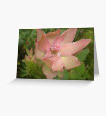 Flowers in Kirstenbosch  Greeting Card