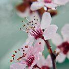 Spring by EkaterinaLa