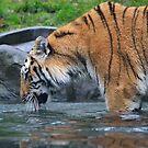 Thirsty Tiger by EkaterinaLa