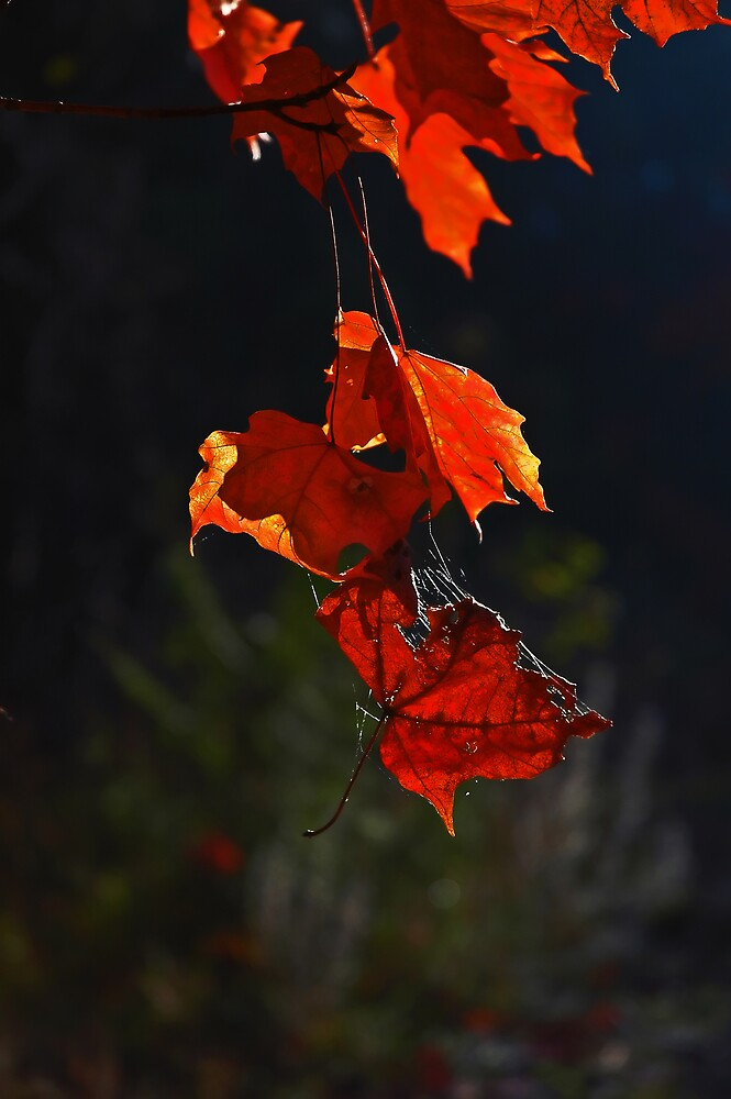 Hanging by a Thread by ajnphotography