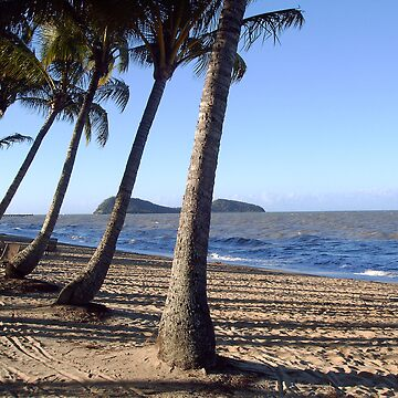 Palm Cove by Dimages