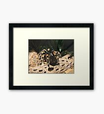 Red Knee Tarantula Framed Print