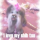 SHIH TSU  in pink  by francelle  huffman