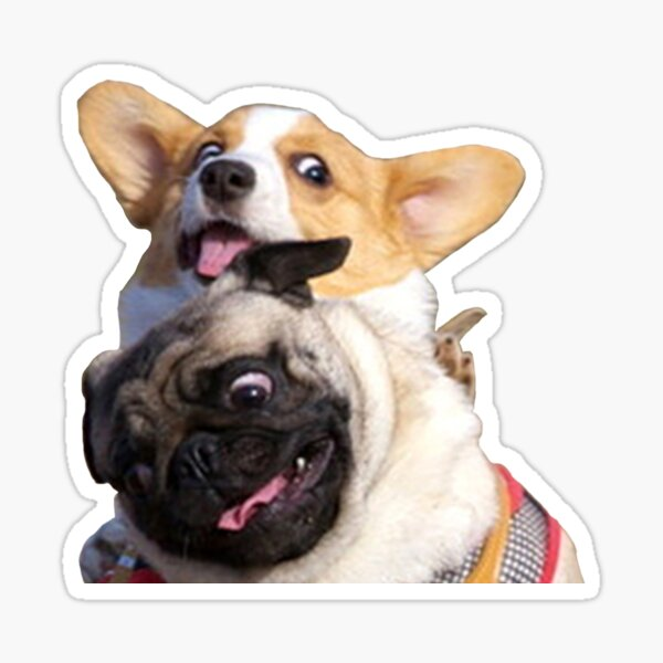 Corgi and Pug Sticker