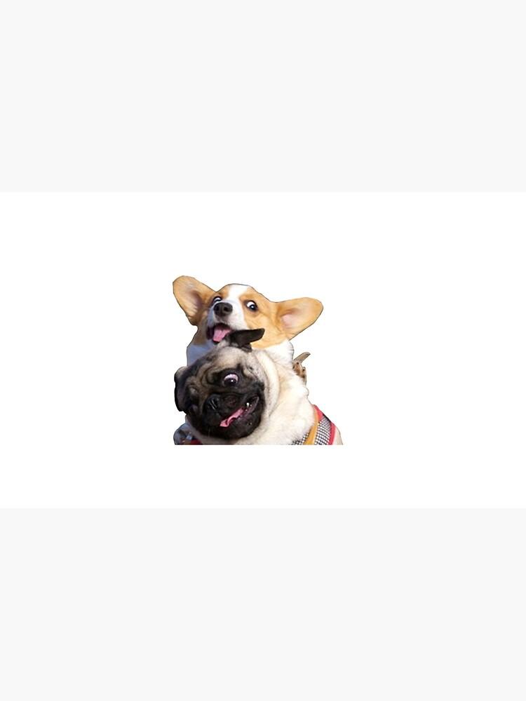 Corgi and Pug by evelyngruen