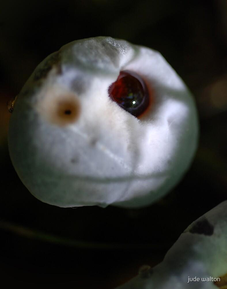 fungus dome by jude walton