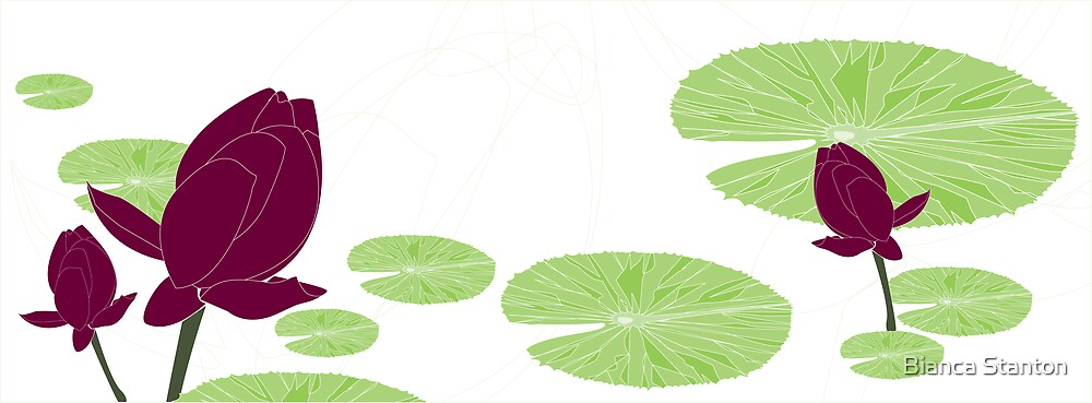 waterlily white by marbia