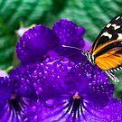 Purple dream by Manon Boily