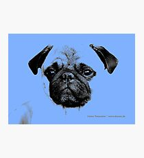 mops puppy pup baby blue Photographic Print