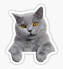 British Shorthair Cat Sticker