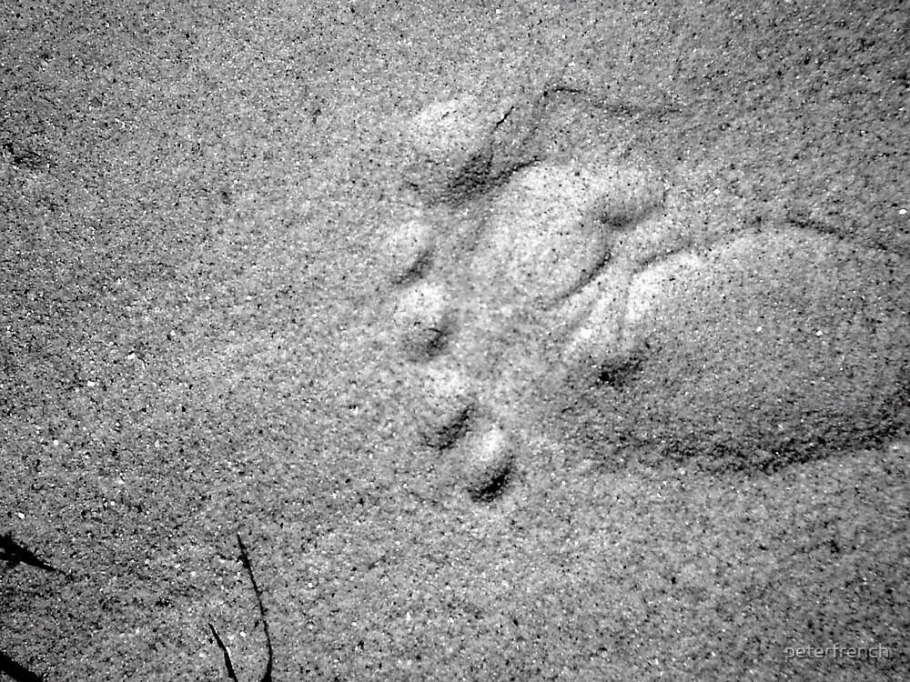 footprint by peterfrench