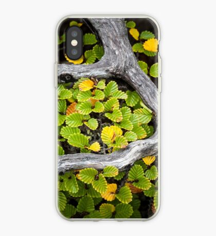 Wrapped Fagus, Mt Field, Tasmania iPhone Case